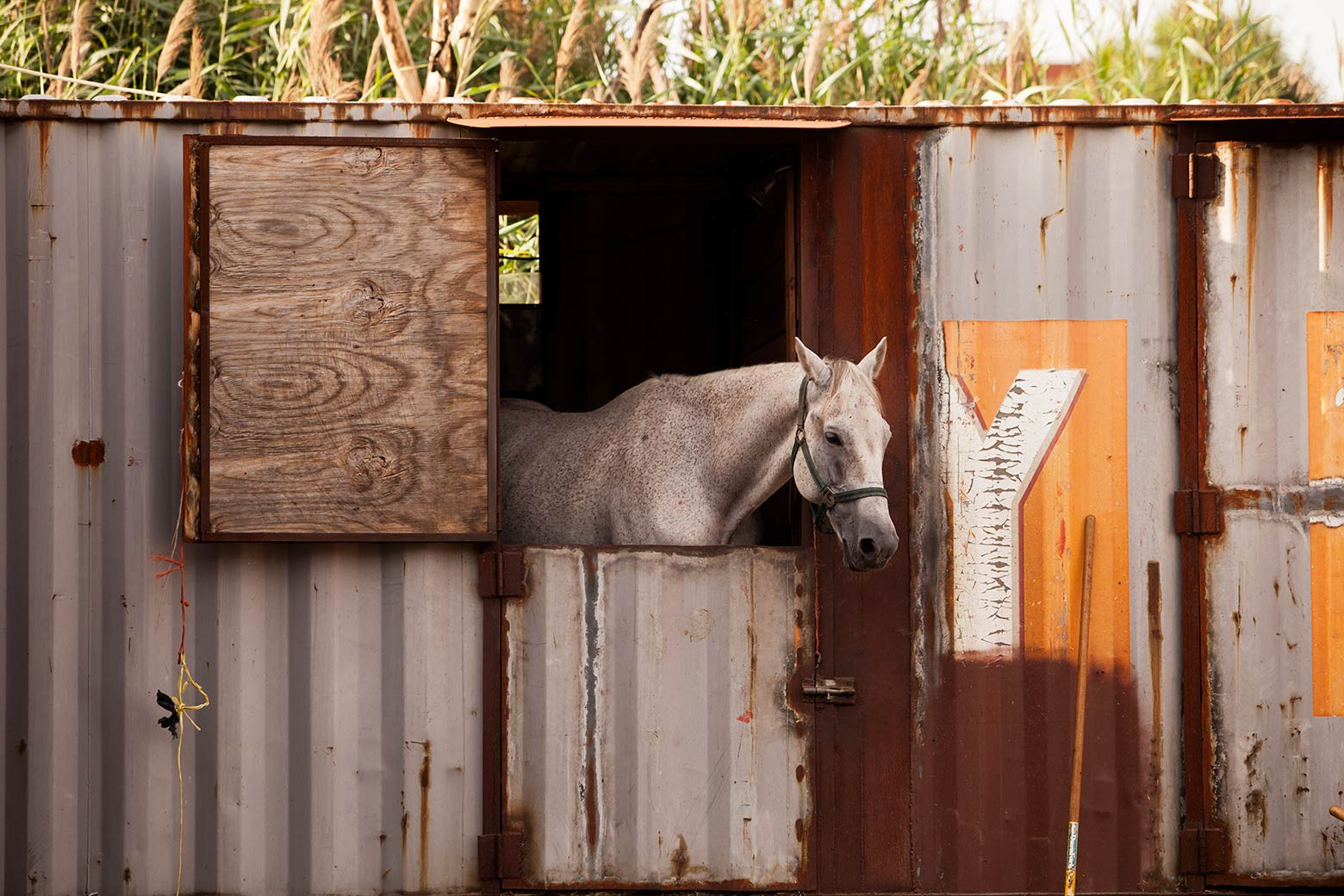_MG_8053horse-in-containerweb.jpg